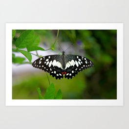 Butterfly Large Art Print