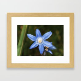 Snow glories Framed Art Print