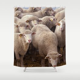 Sheep Herd Shower Curtain