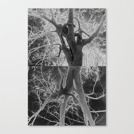 My Roots Canvas Print