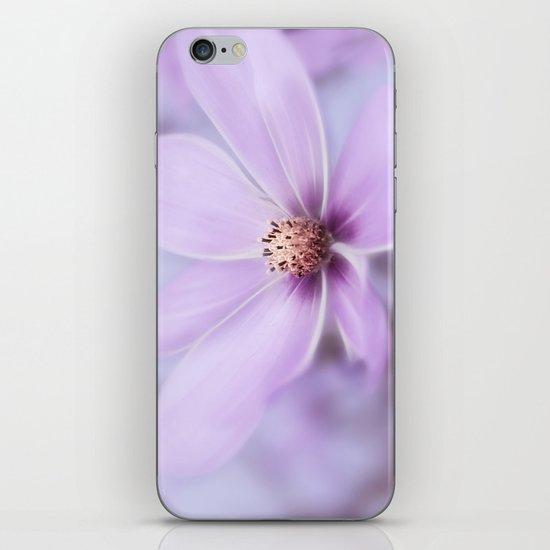 Purple Cosmea iPhone & iPod Skin