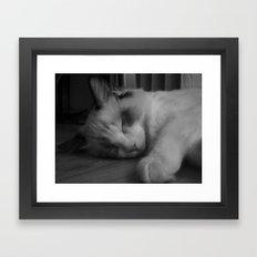 Sleeping ragdoll cat. Framed Art Print