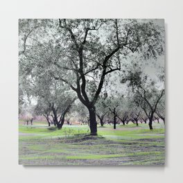 fishing olives verda-2 Metal Print