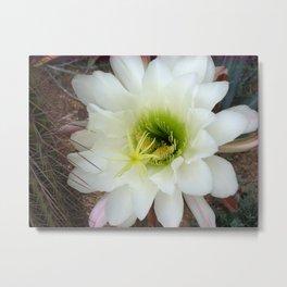 White cactus flower Metal Print