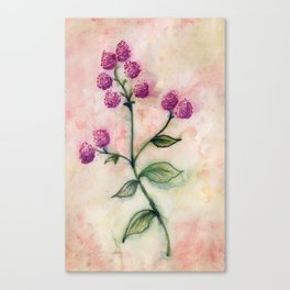 Peppermint Flower Canvas Print