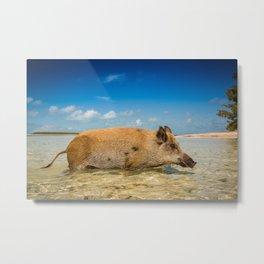 Pig in Bahamas Metal Print