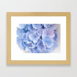 Blue Hydrangeas #3 #decor #art #society6 Framed Art Print