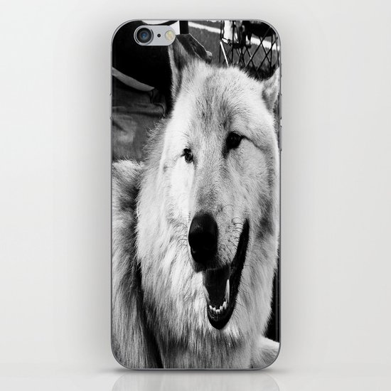 Wolf Dog iPhone & iPod Skin