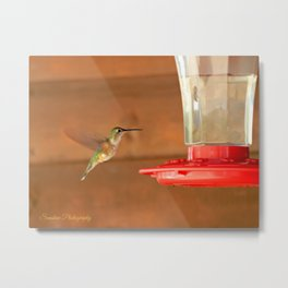 Female Broad-Tailed Hummingbird Metal Print