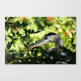 Hiding Deep In The Trees Canvas Print