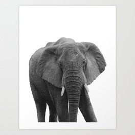 African Elephant Looking in the Camera | Black and White | Wildlife Photography Art Print