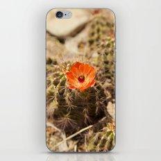 Cactus Flower (Portrait) iPhone & iPod Skin