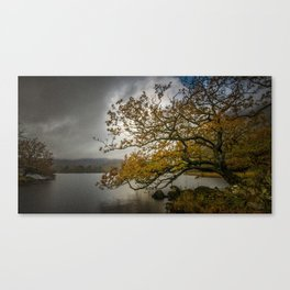 Rydal Tree Canvas Print