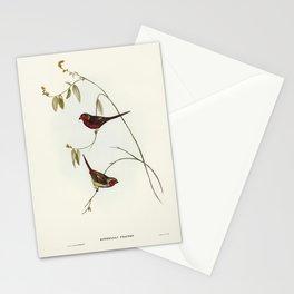 Crimson Finch (Estrelda Phaeton) illustrated by Elizabeth Gould (1804-1841) for John Goulds (1804-18 Stationery Cards