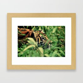 Stalking Framed Art Print
