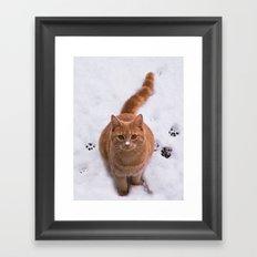 Ginger Kitty Discovers Snow! Framed Art Print