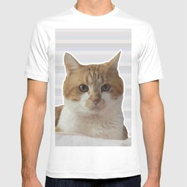 Red cat on a striped background. T-shirt