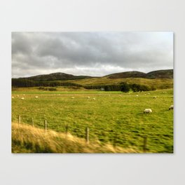 The Land of the Sheep Canvas Print