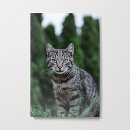 Cat by Leonie Photograph Metal Print