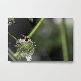 Bee being bee Metal Print