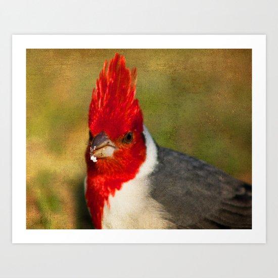 Red-crested Cardinal Art Print