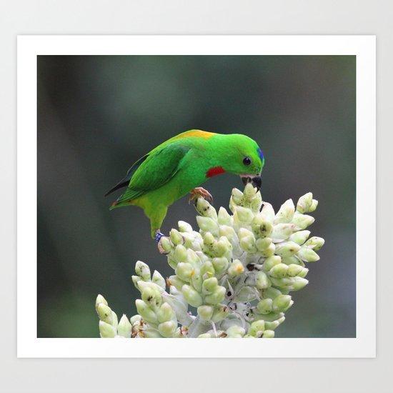 Blue Crowned Hanging Parrot Art Print