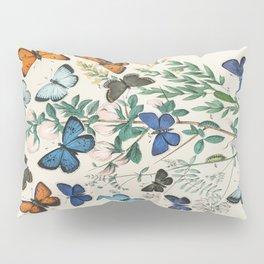 Vintage Scientific Illustration Butterfly Botanical Floral Lithograph Encyclopaedia Diagrams  Pillow Sham