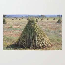 Harvested Sesame Crop Rug