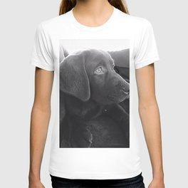 Labrador Puppy Portrait T-shirt