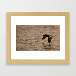 Pelican 2 Framed Art Print
