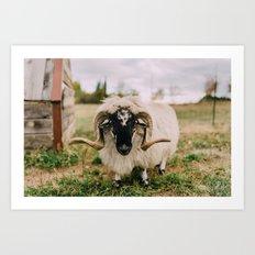 The Curious Sheep Art Print