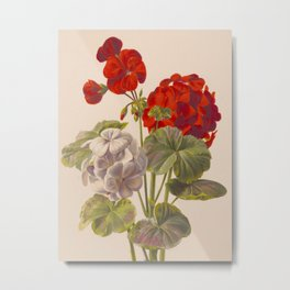 Geranium no. 5 - Ryan Charles, L. Prang & Co. - 1893 Metal Print