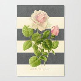 botanical stripes I - gray Canvas Print