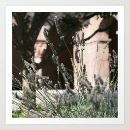 Lavender of Cloisters Art Print