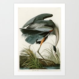 Great blue Heron - John James Audubon's Birds of America Print Art Print