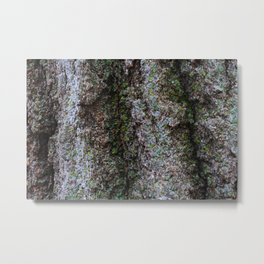 Green Mossy Bark Metal Print