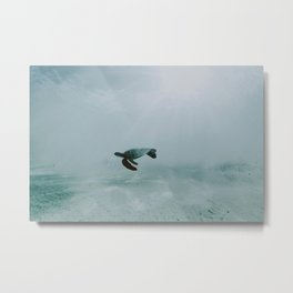 Sea Turtle II / Kailua-Kona, Hawaii Metal Print