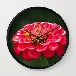 Macro photo red flower Wall Clock