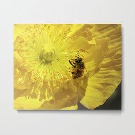Bee in Yellow Poppy 1 Metal Print