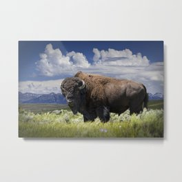 American Buffalo Bison by Yellowstone National Park in Montana Metal Print