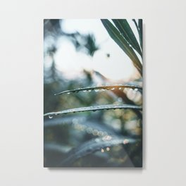 morning dewdrops Metal Print