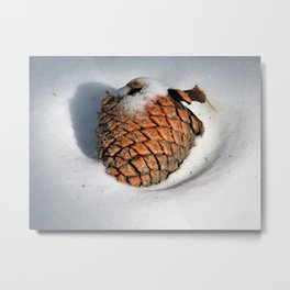 If a pine cone falls in the snow... Metal Print