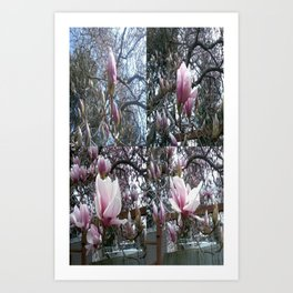 Blossoms Art Print