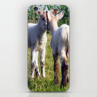 silence of the lambs iPhone & iPod Skins featuring Spring Lambs by Valann