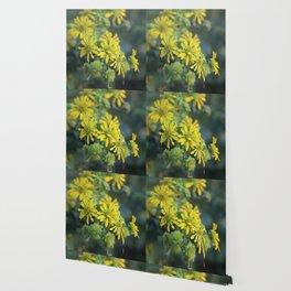 Thin Leaf Sunflowers Wallpaper
