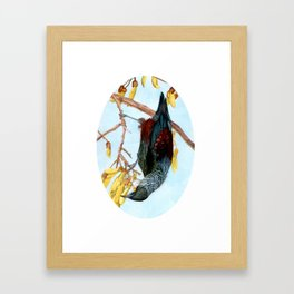 Tui in a Kowhai Tree Framed Art Print