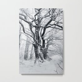 Huge frosted Tree in Winter Metal Print