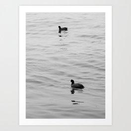 birds on water Art Print
