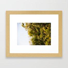 Jasmine at Dusk Framed Art Print