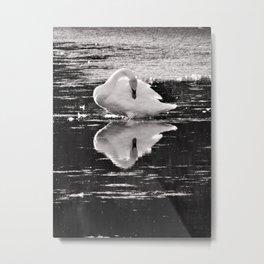Swan reflection B&W Metal Print